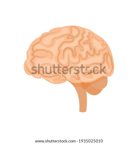 Brain or mind side view line art color  icon for medical apps and websites.