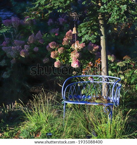A vintage blue garden bench highlighted by the sun with pink strawberry vanilla hydrangeas in the backgrounds creating a beautiful landscape picture