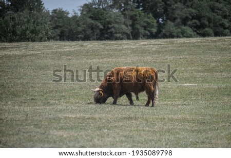 Cow in a green field Royalty-Free Stock Photo #1935089798