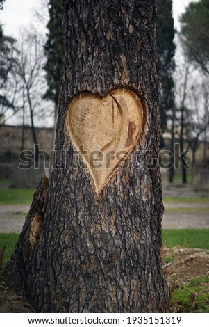 Big heart carved on the bark of a dead tree. Monument to the love for trees and nature. Romantic gestures in Verona, the city of love. Heart carving photo. Royalty-Free Stock Photo #1935151319