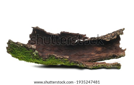Green moss on tree bark isolated on white background Royalty-Free Stock Photo #1935247481