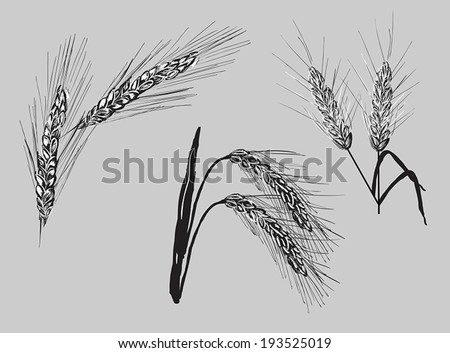 illustration with set of wheat ears isolated on grey background #193525019