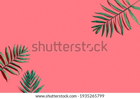 Tropical palm leaves from above - flat lay Royalty-Free Stock Photo #1935265799