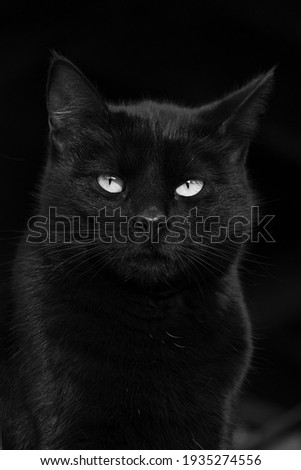 Gorgeous black cat with green eyes close up, black and white portrait