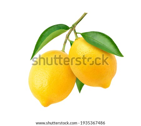 Two Lemon fruits hanging with branch and leaves isolated on white background. Clipping path. Royalty-Free Stock Photo #1935367486