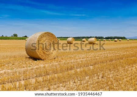 Round bales of straw rolled up on field against blue sky, autumnal harvest scenery Royalty-Free Stock Photo #1935446467
