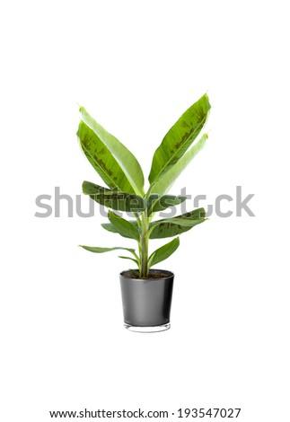 Ornamental Plants over white background #193547027