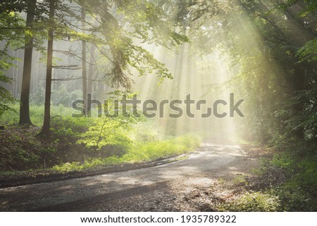 Pathway in a majestic green deciduous forest. Natural tunnel. Mighty tree silhouettes. Fog, sunbeams, soft sunlight. Atmospheric dreamlike summer landscape.    Royalty-Free Stock Photo #1935789322