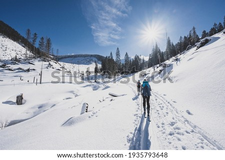 Mountaineer backcountry ski walking ski alpinist in the mountains. Ski touring in alpine landscape with snowy trees. Adventure winter sport.