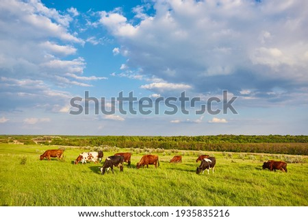 Cows grazing on a green summer meadow Royalty-Free Stock Photo #1935835216