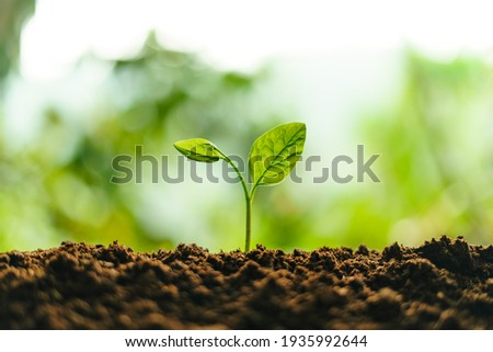 Small trees on the soil in nature Planting trees Royalty-Free Stock Photo #1935992644