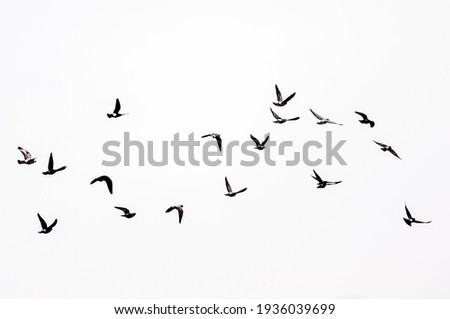 Birds flying in the sky.  Royalty-Free Stock Photo #1936039699