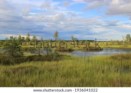 A very beautiful marsh lake covered with bright red grass and shrubs in the warm summer evening. Yelnya swamps in Belarus near the city of Miory. Gorgeous colors of nature Royalty-Free Stock Photo #1936041022