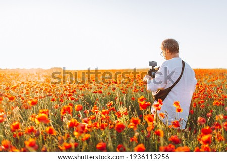 Photographer or videographer make pictures in red poppy field. Back view of man with camera, copyspace
