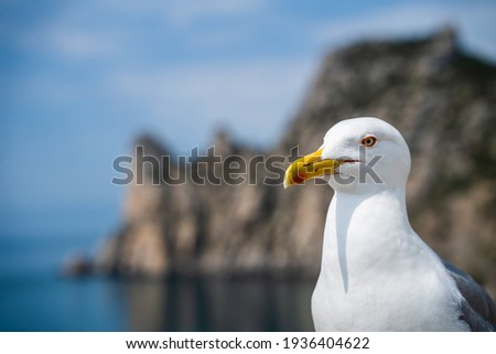 Seagull bird or seabird standing feet on sea beach. Close up view of white gray bird seagull in sea rock. Wild seagull portrait on natural blue sky background. Sea gull bird animal closeup isolated Royalty-Free Stock Photo #1936404622