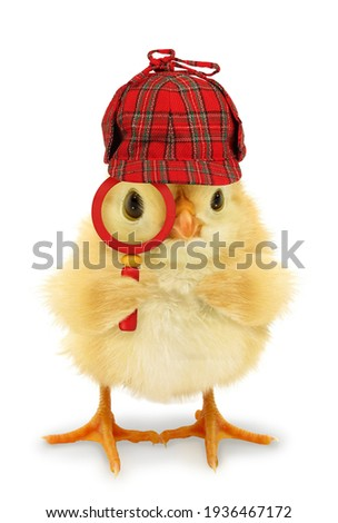 Chick detective is looking through magnifier lens conceptual photo Royalty-Free Stock Photo #1936467172