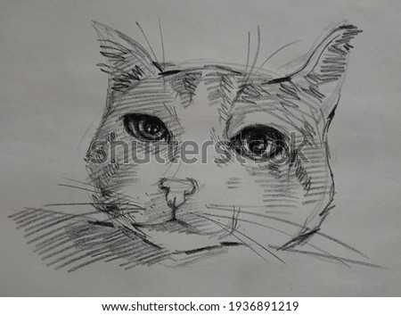 Art Drawing Fine art Sketch Cute Cat Thailand