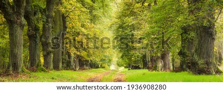 Avenue of Old Linden Trees in early autumn Royalty-Free Stock Photo #1936908280