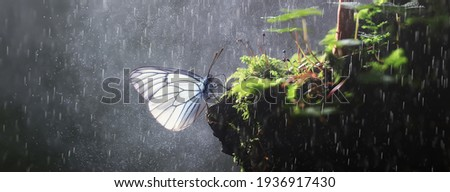butterfly on mushroom in the forest, magic picture macro photo, seasonal landscape spring in the park