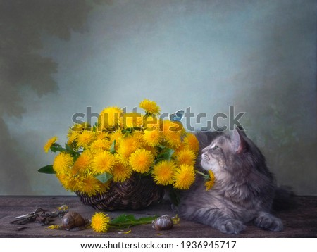 Still life with basket of dandelions and curious kitty