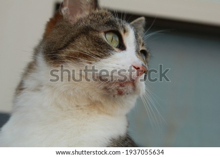 Chin of a house cat with acne Royalty-Free Stock Photo #1937055634