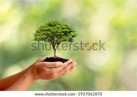 Trees are planted on the ground in human hands with natural green backgrounds, the concept of plant growth, and environmental protection. Royalty-Free Stock Photo #1937062870