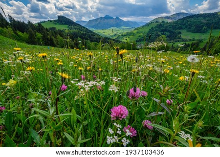 A meadow full of beautiful mountain flowers in the background of the Mala Fatra mountains. Discover the spring beauty of the mountains. Royalty-Free Stock Photo #1937103436