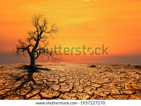Tree silhouettes die in arid regions due to global warming. Royalty-Free Stock Photo #1937227270