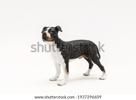 Realistic plastic toy dog isolated on white background. Cute little animal toy for kids. Copy space