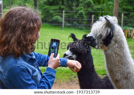 A girl and two curious lamas Alpaca, photography, video recording, mobile phone, taking a picture, snap, screen,friendly,  friendship, pet animal, farm, long hair, black and white, funny, feeding, ZOO