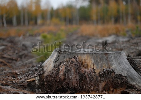Landscape. A large old stump from a felled tree is on a blurred background of coniferous and deciduous forest. Tree cutting, forest industry, flora and fauna care, protection. World Environment Day. Royalty-Free Stock Photo #1937428771