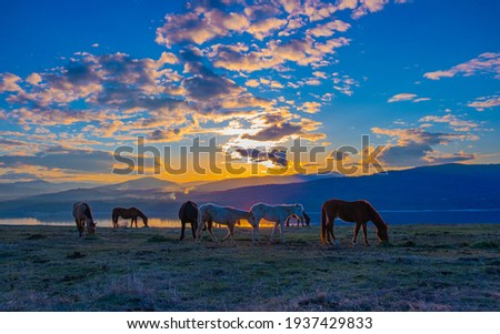 Horses with beautiful sunset in background.