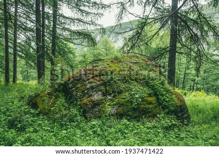 Scenic forest landscape with big mossy stone with green grasses among thickets and trees. Vivid scenery with large boulder with moses and lush vegetation. Green rock with moss and wild flora in forest Royalty-Free Stock Photo #1937471422