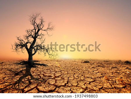 Tree silhouettes die in arid regions due to global warming. Royalty-Free Stock Photo #1937498803