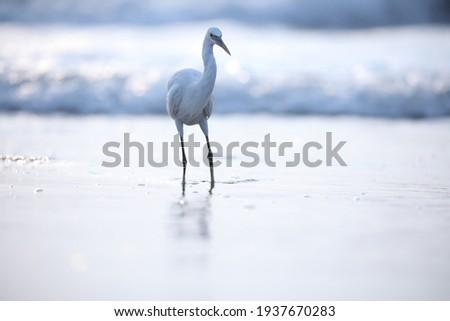 India, 11 November, 2020 : An egret on the beach, heron, white bird, Seabird, Egret. Royalty-Free Stock Photo #1937670283