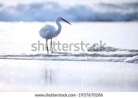 India, 11 November, 2020 : An egret on the beach, heron, white bird, Seabird, Egret. Royalty-Free Stock Photo #1937670286