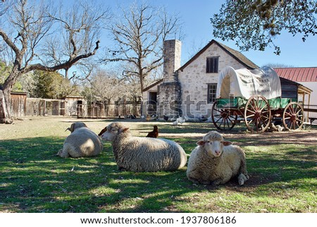 Sheep and a covered wagon at Lyndon B. Johnson State Park and Historic Site and the Sauer-Beckmann Farmstead, living history farm that presents rural Texas life as it was around 1918. Royalty-Free Stock Photo #1937806186