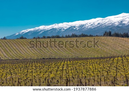 Grapes fields and a snowy mountain at bekaa lebanon Royalty-Free Stock Photo #1937877886