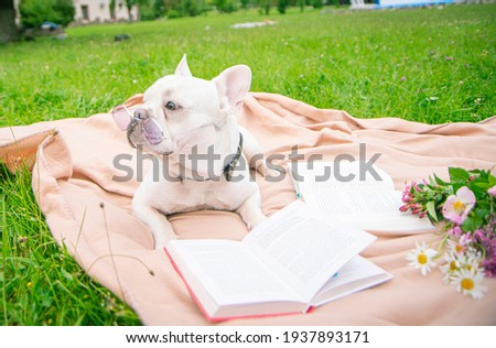 dog on a blanket near a book with glasses, animal on green grass, light blanket, pink wildflowers, smart funny, green grass, reading dog at picnic, the dog reads