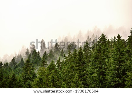 Misty foggy mountain landscape with fir forest and copyspace in vintage retro hipster style Royalty-Free Stock Photo #1938178504