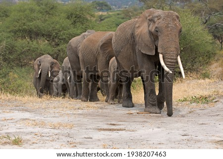 Elephant herd in the Tarangire National Park Royalty-Free Stock Photo #1938207463