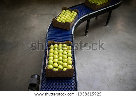 Top view of crates full with green organic apples being transported on conveyer belt in food processing factory. Royalty-Free Stock Photo #1938315925