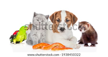 Group of pets sit together in front view. Isolated on white background Royalty-Free Stock Photo #1938450322