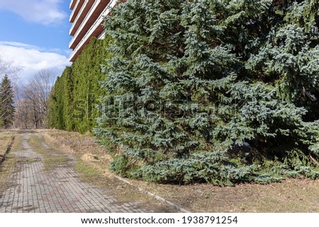 Examples of landscaping with conifers in the city and park. Conifers in landscaping and urban landscaping. Royalty-Free Stock Photo #1938791254