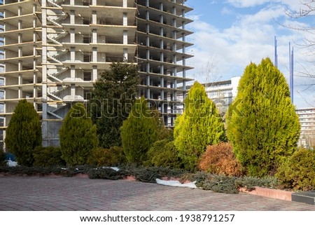 Examples of landscaping with conifers in the city and park. Conifers in landscaping and urban landscaping. Royalty-Free Stock Photo #1938791257
