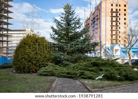 Examples of landscaping with conifers in the city and park. Conifers in landscaping and urban landscaping. Royalty-Free Stock Photo #1938791281