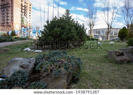 Examples of landscaping with conifers in the city and park. Conifers in landscaping and urban landscaping. Royalty-Free Stock Photo #1938791287