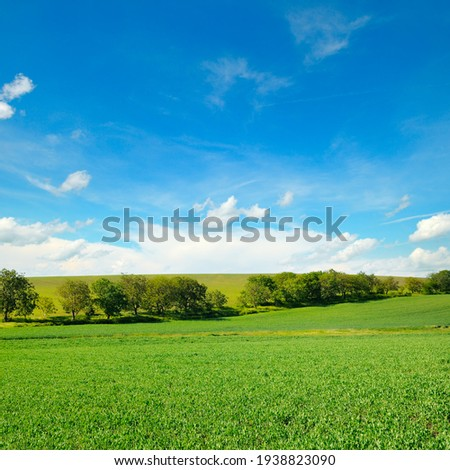 Green pea field and blue sky with light clouds. Royalty-Free Stock Photo #1938823090