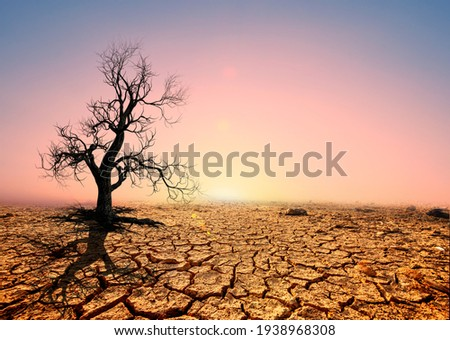 Tree silhouettes die in arid regions due to global warming. Royalty-Free Stock Photo #1938968308