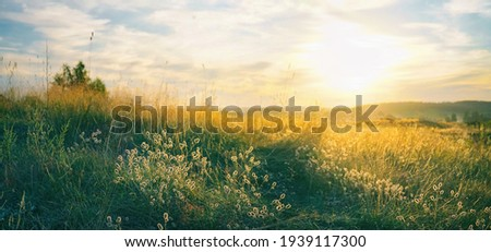 Beautiful natural panoramic countryside landscape. Blooming wild high grass in nature at sunset warm summer. Pastoral scenery. Selective focusing on foreground. Royalty-Free Stock Photo #1939117300